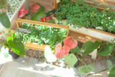 プランターの土と植木の捨て方
